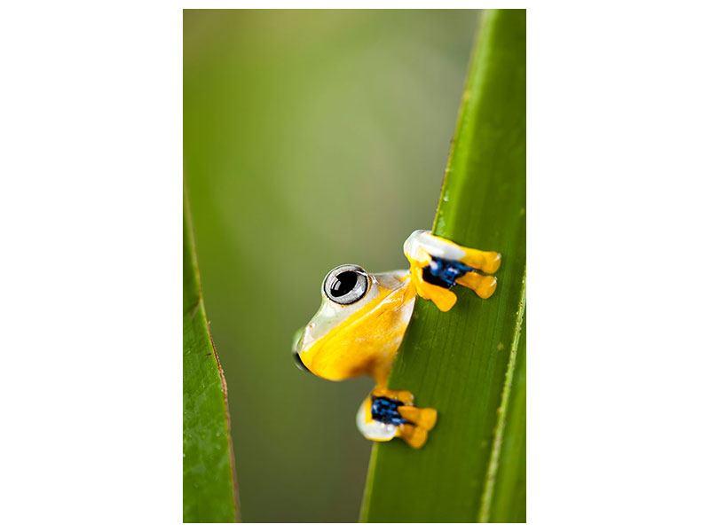 Klebeposter Frosch - 60 x 90 cm